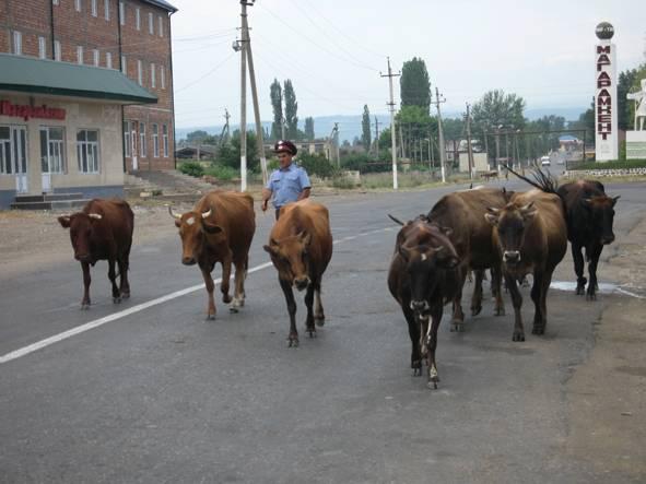 У Медведева поддержали идею МВД РФ приравнять авто- и велопробеги к демонстрациям - Цензор.НЕТ 1785