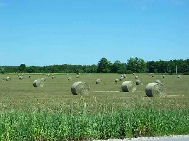 Американские стога сена, как пример индустриализации страны