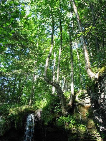 Тройное дерево над водопадом