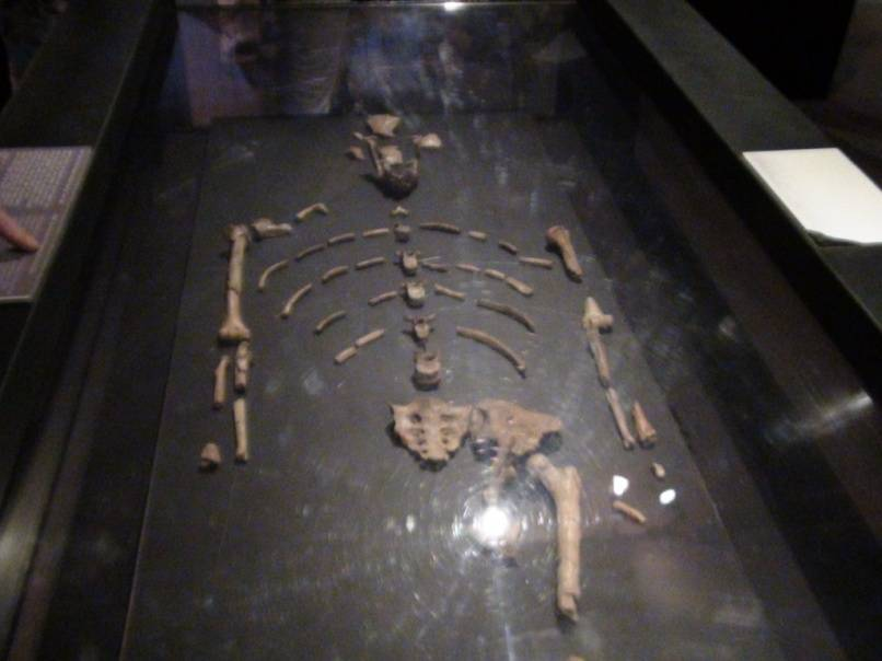 Это — Люси, жила 3,2 млн лет назад