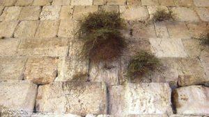 Западная Стена в Израиле ( фото из PublicDomainPictures.net)