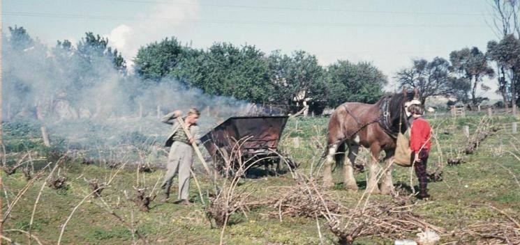Франция, сжигание старых виноградников