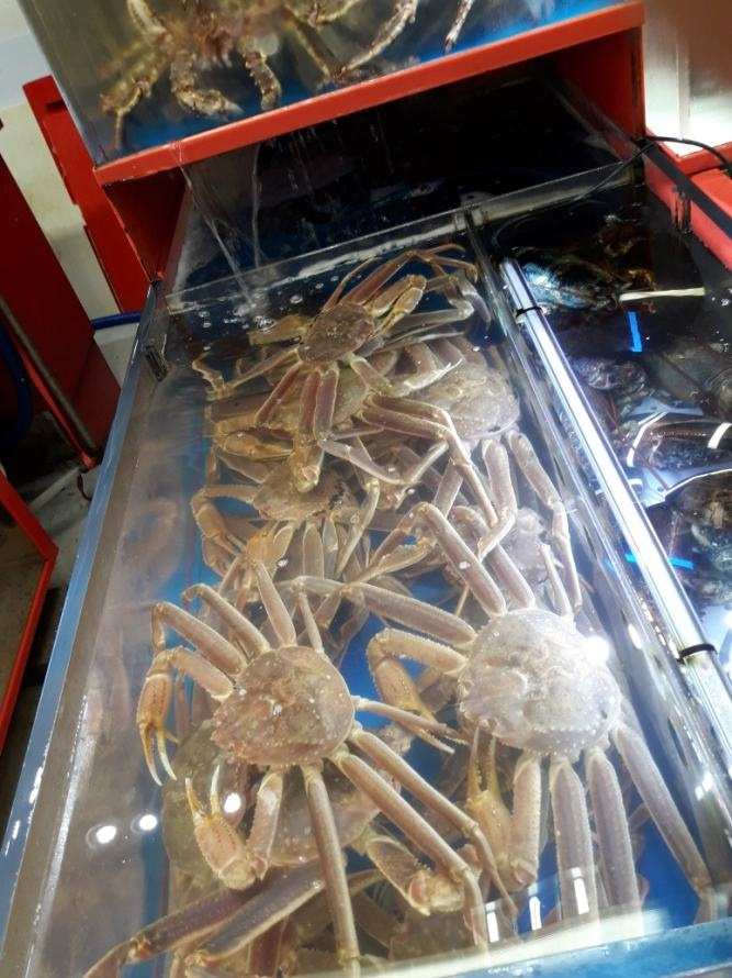 Пусан. Рыбный рынок