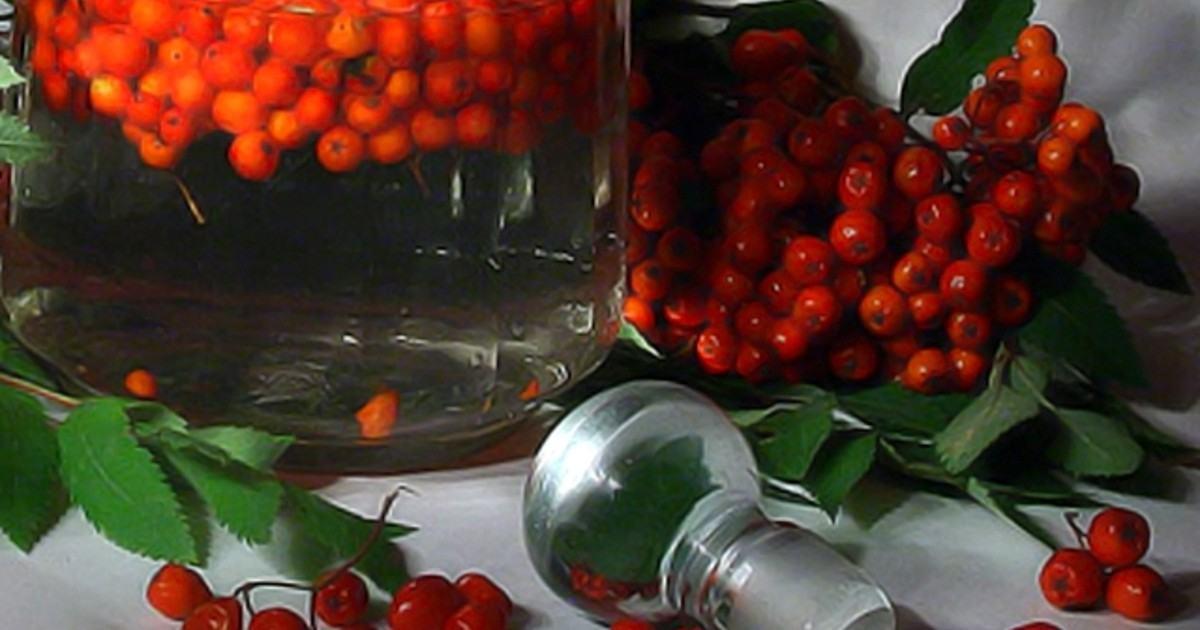 Настойка из рябины красной на водке
