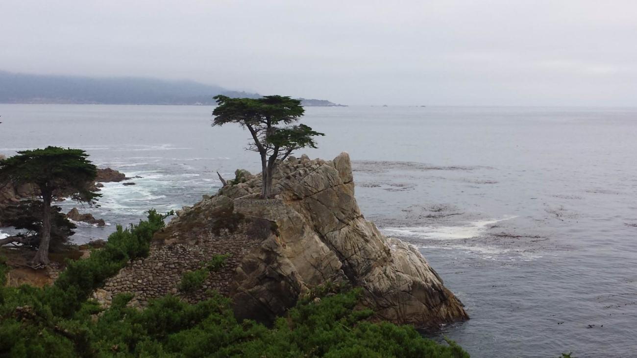Этот кипарис есть на всех фотографиях Калифорнии. Он как раз находится на дороге «17 миль»