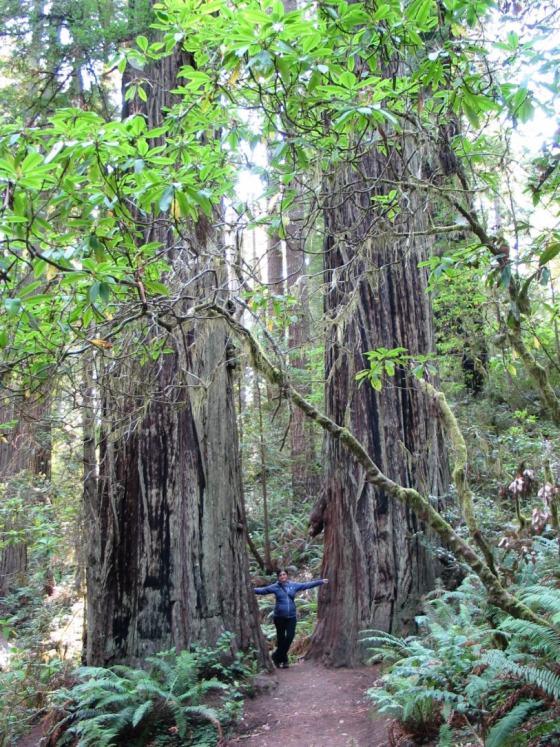 Регина заблудилась в двух деревьях