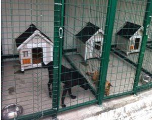 Питомник для бездомных собак