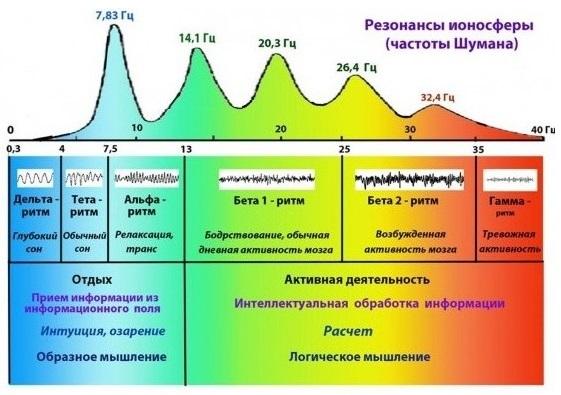 Рис. 3. Влияние частот Шумана на мозговые ритмы